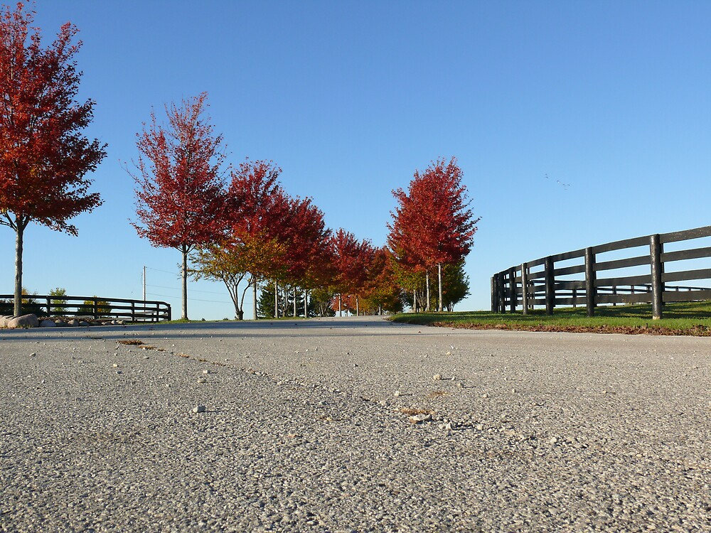 Tree lined road - Fall by RayG