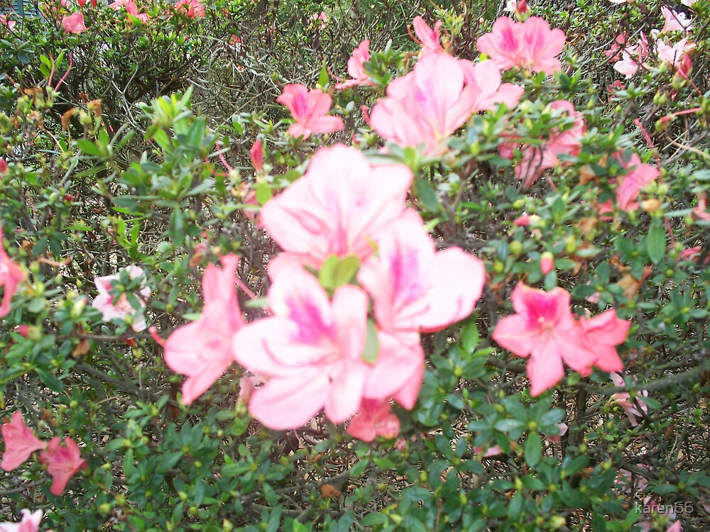 Pink Flower Bush by karen66