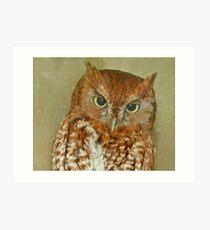 eastern screech owl Art Print