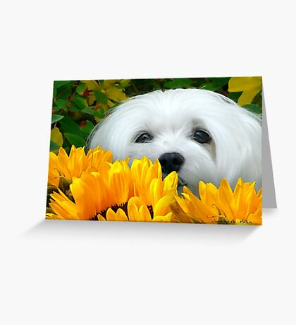 Snowdrop the Maltese - I Spy with my little Eye ! Greeting Card