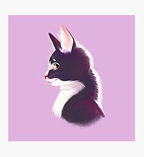 Sly cat in profile Photographic Print