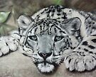 Snow leopard by Valerie Simms