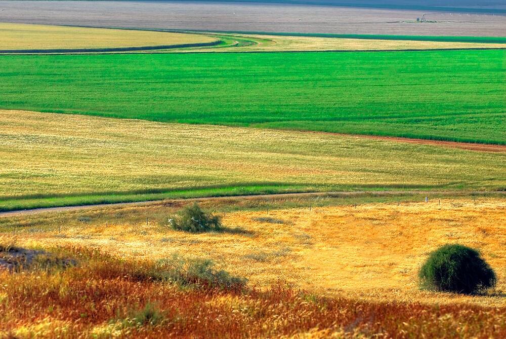 Wheat field, Negev desert, Israel by Eyal Nahmias