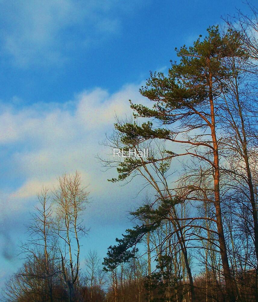 Sky Blue by RLHall