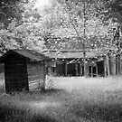 Backyard by David Lamb