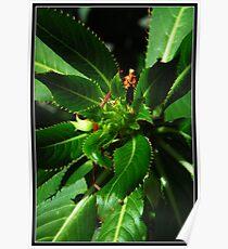 macro green plant Poster