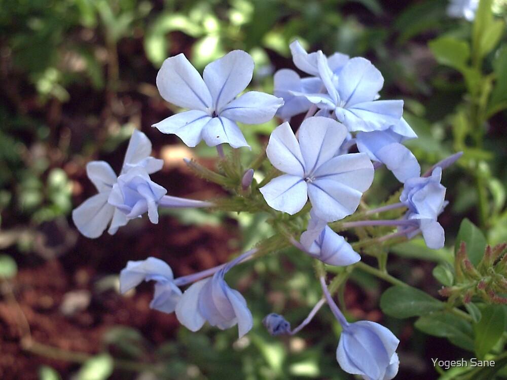 small flowers by Yogesh Sane