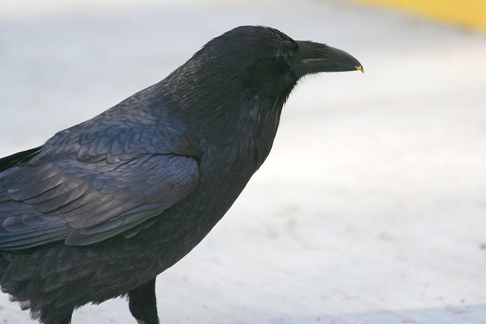 Raven by Chris Clarke