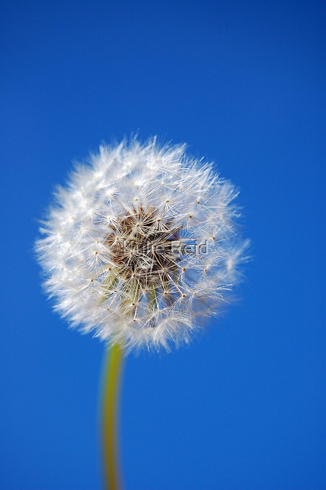 Make a Wish (in colour) by Kylie Reid