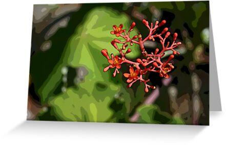 Tropical Flowers by MMerritt