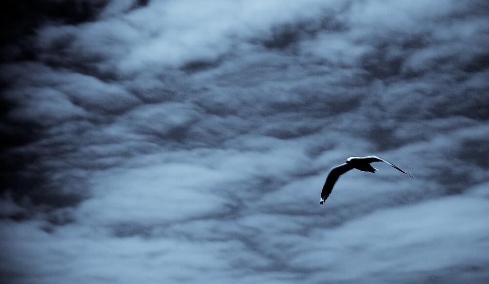 Bird in flight by JaneH