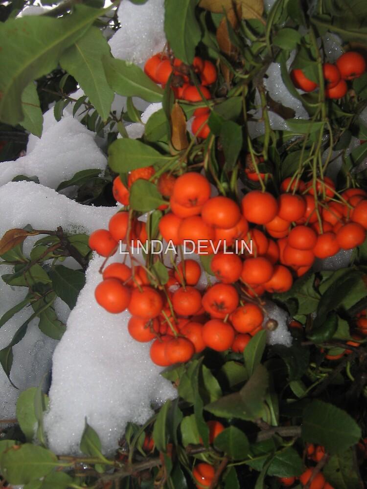 Bittersweet and Snow by LINDA DEVLIN