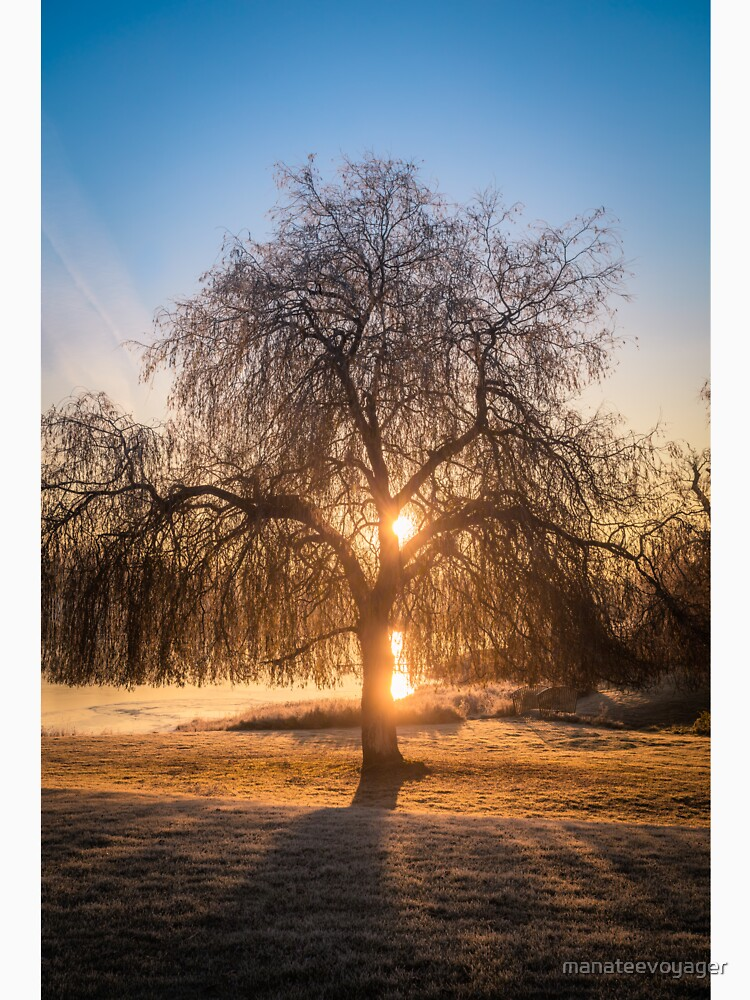 Weeping Willow Tree Sunrise  by manateevoyager