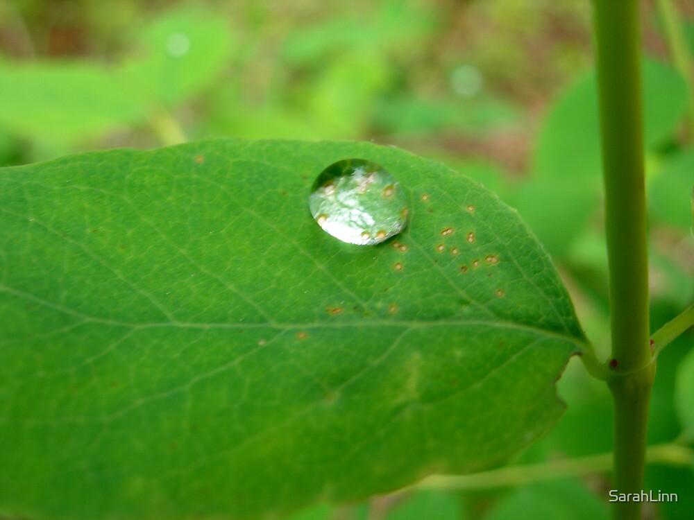 Dew Drop by SarahLinn