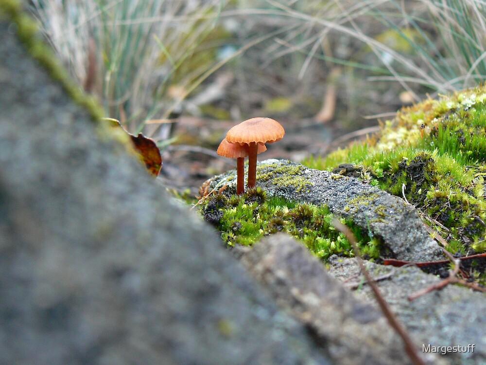 Orange  umbrellas by Margestuff
