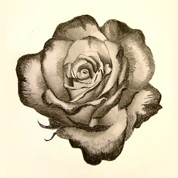 Rimmed rose sketch by MCColyer