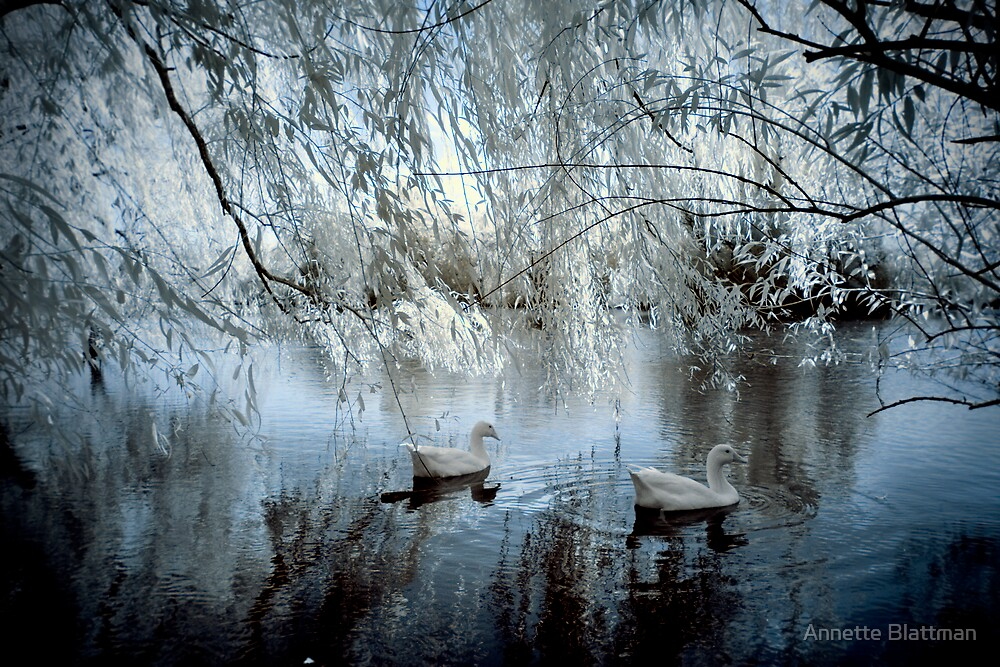 The Blue Pond by Annette Blattman