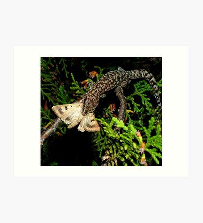 Gecko Kill Art Print