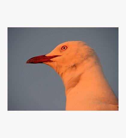 Glow Gull Photographic Print