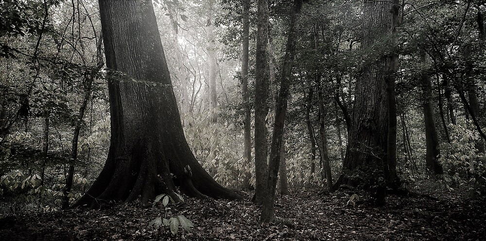 Congaree National Park 01 by jarrid spicer