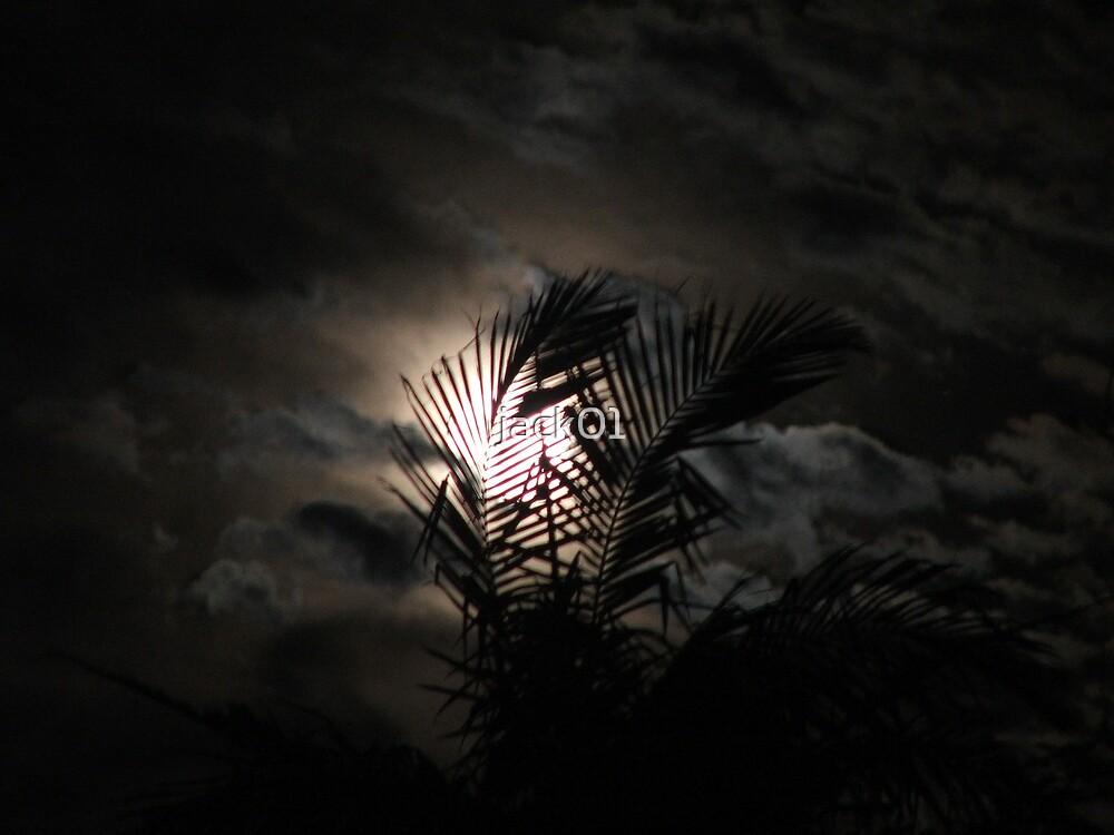 Moon lit palm  by jack01