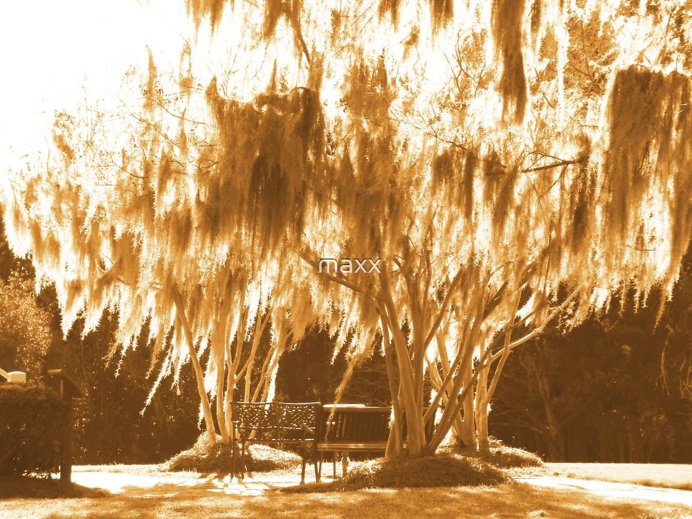 golden oak by maxx