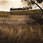 Vineyards, near Bright by Roz McQuillan