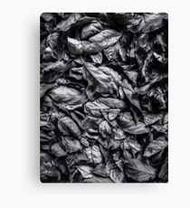 closeup leaf texture in black and white Canvas Print