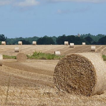 A Norfolk Cornfield after the harvester by johnny2sheds