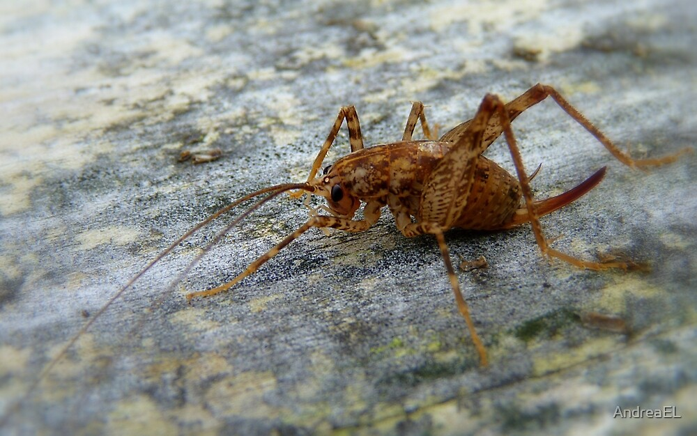 Jumping Jack - Weta - New Zealand by AndreaEL