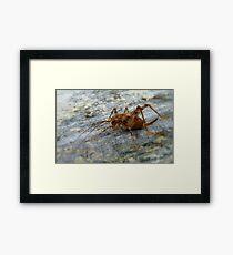 Jumping Jack - Weta - New Zealand Framed Print