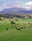 Mt Rowland and the Wilmot Valley by Graeme  Hyde
