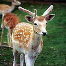 Deer2 by moonstone