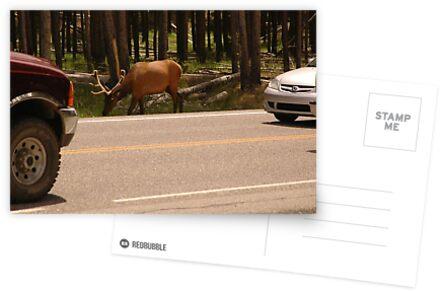 Wildtiere, die mit Nationalpark-Verkehr konkurrieren von cameraperson