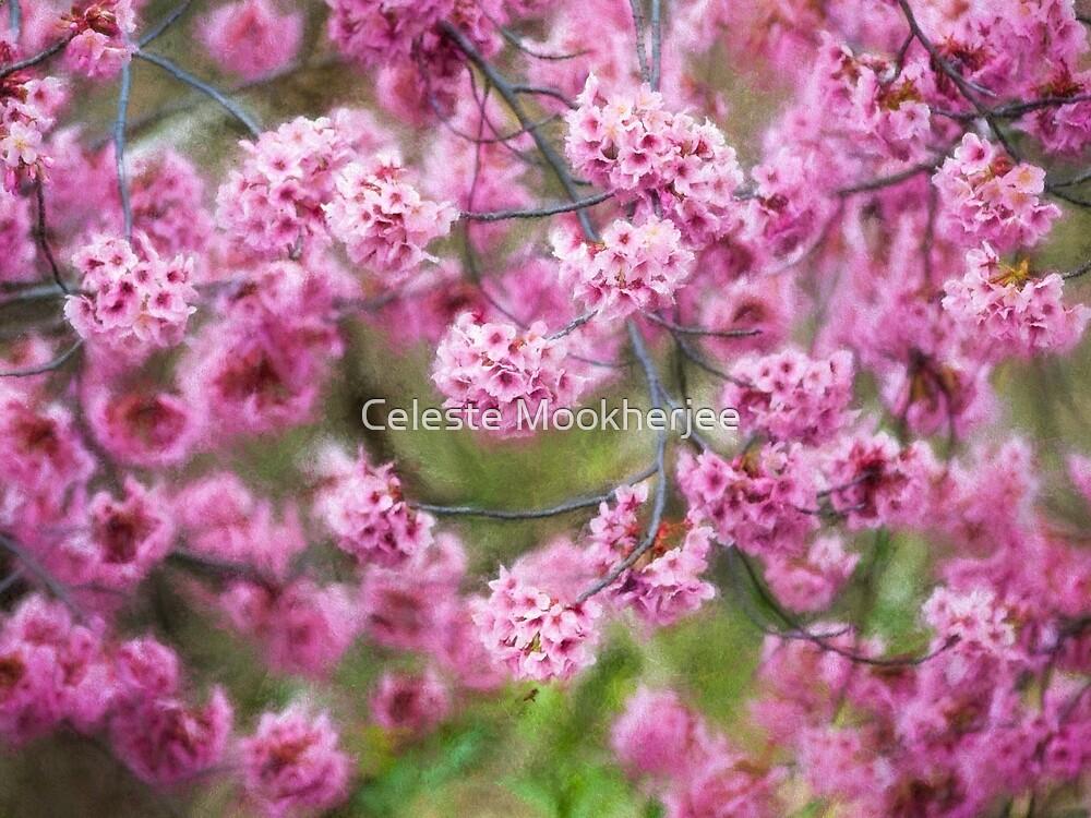 Springtime impressions - cherry blossoms by Celeste Mookherjee