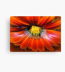 Spicy! Canvas Print