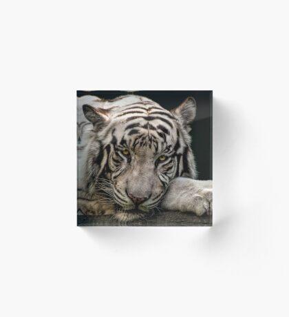 Weißer Tiger Acrylblock