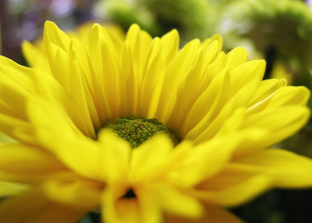 Yellow by stephA