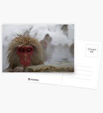 Japanese Snow Monkey Postcards