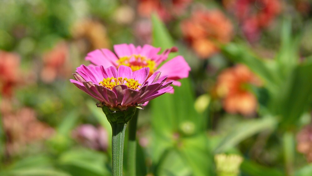 Flower Power by Matthew Weaver