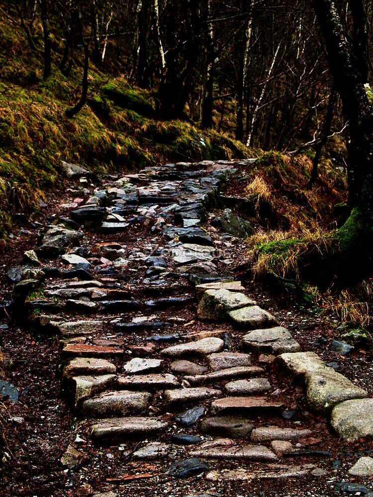 Rocky Path by Zepeteus