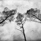 Ladies Of The Woods  by Karen Stahlros