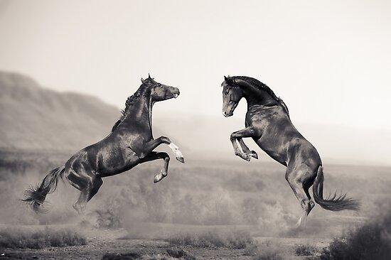 Horses battle by marusya1