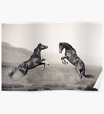Horses battle Poster