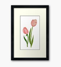 Too Little Tulips Framed Print