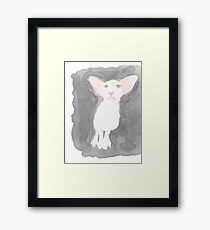 Sweet oriental shorthair cat Framed Print