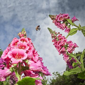 Foxgloves and Bee at Great Dixter House by heatherbuckley