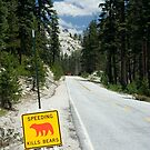 Speeding Kills Bears by Chris Clarke