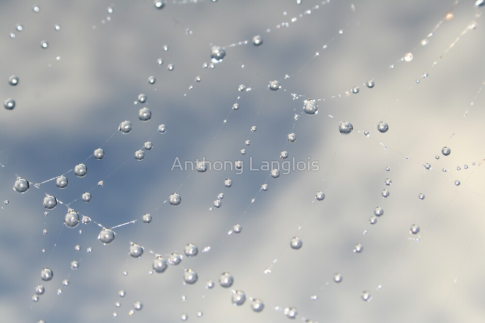 spiders web... by Anthony Langlois
