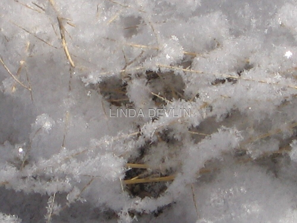 Whiteness of Snow!! by LINDA DEVLIN